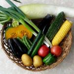 自家製菜園で採れた野菜